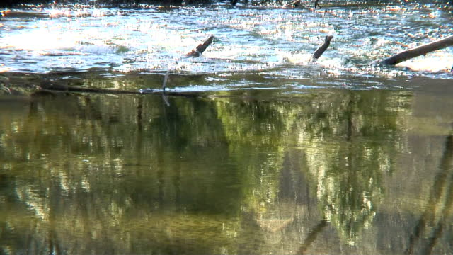 merced river, yosemite national park, ca - merced river stock videos & royalty-free footage