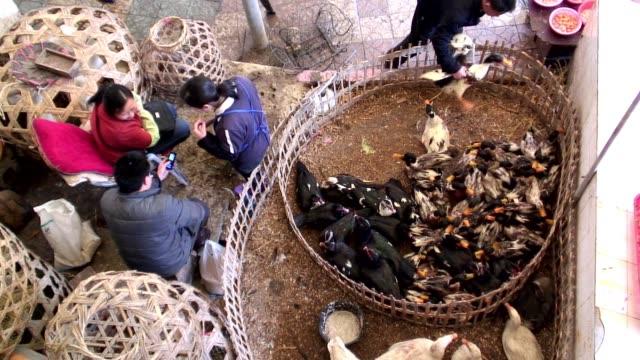 a merchant sells ducks and rabbits at an outdoor market in kaili, china. - kina bildbanksvideor och videomaterial från bakom kulisserna