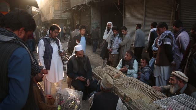 vidéos et rushes de merchants sell birds as patrons shop in the bird market in the old city in kabul, afghanistan, monday, november 03, 2017. photographer: victor blue -... - kaboul
