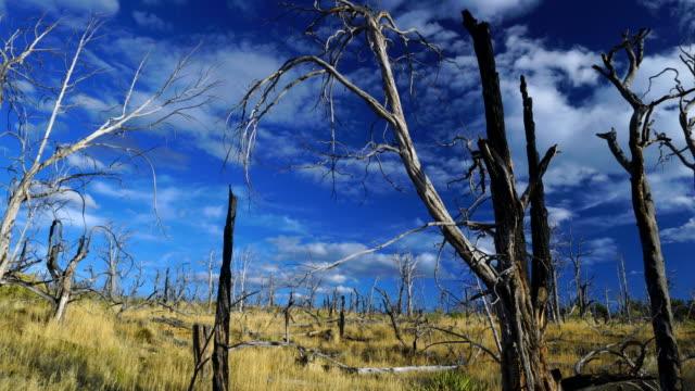mesa verde national park, unesco world heritage, colorado, usa, north america, america - parco nazionale di mesa verde video stock e b–roll