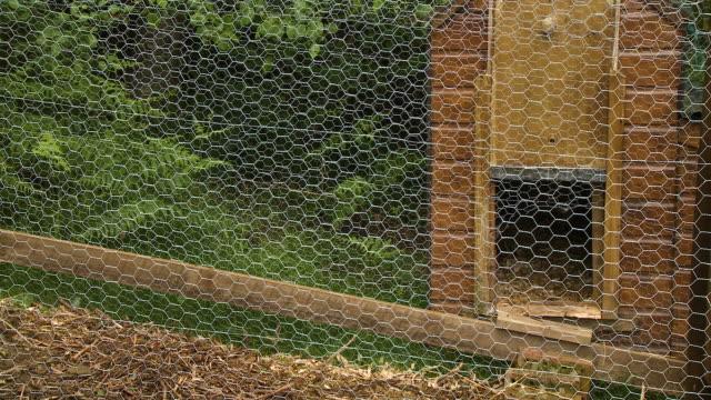 vidéos et rushes de mesh wire fencing and coop - l'homme et la machine