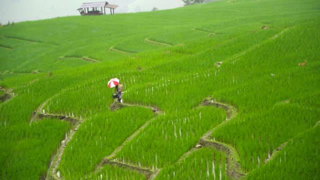 messenger walk along rice terrace under raining day to send food