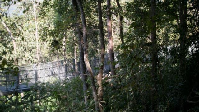 vídeos de stock e filmes b-roll de metal bridge over the forest - ecoturismo