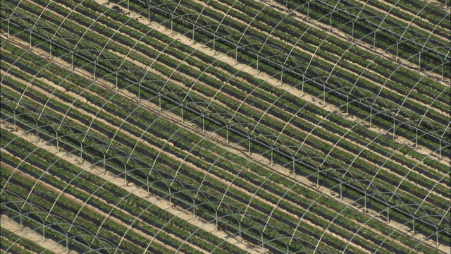aerial zo metal hoops over rows of strawberries, stellenbosch, western cape, south africa - stellenbosch stock videos and b-roll footage