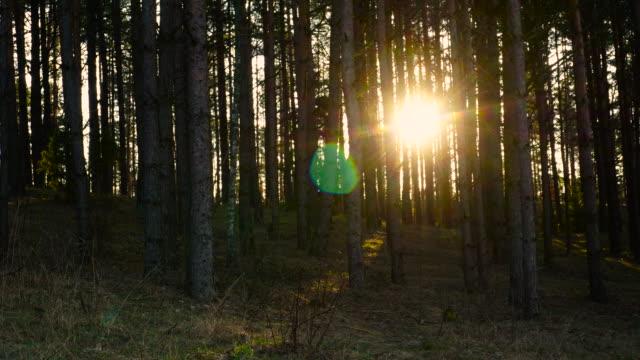 隕石の森 - 北極星点の映像素材/bロール