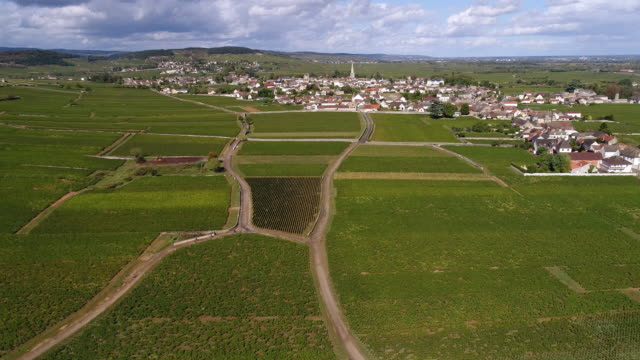 meursault burgundy  from above flying forward - scena rurale video stock e b–roll
