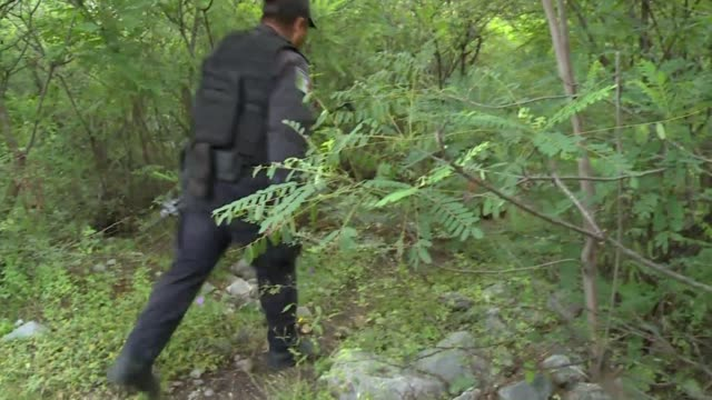 mexican authorities sunday intensified efforts to find 43 students who disappeared more than three weeks ago using dogs horses and divers to broaden... - hooved animal stock videos & royalty-free footage