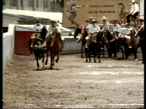 stockvideo's en b-roll-footage met mexican cowboy rides horse and chases bull at charred rodeo then brutally pulls it to ground by its tail, mexico - 1986