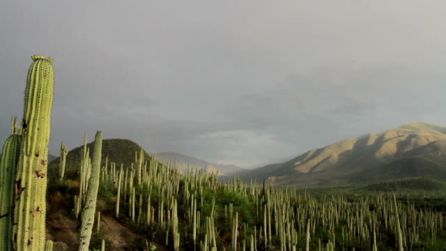 mexican desert of tehuacán and cuicatlán valley - mexican american stock videos & royalty-free footage