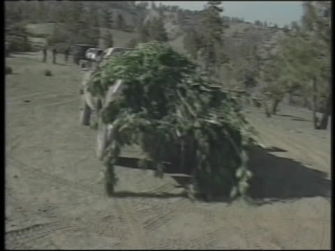 mexican drug lords grow marijuana on california public lands, hauling the plants in the back of a pick-up truck. - エンジェルス国有林点の映像素材/bロール