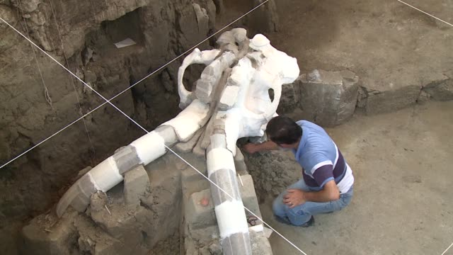 Mexican experts are carefully digging up fossils of a Pleistocene era mammoth believed to have been cut to pieces by ancient humans