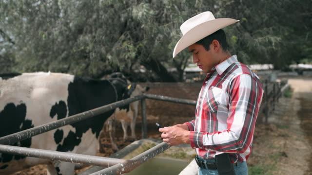 vidéos et rushes de agriculteur mexicain alimentant des vaches - image animée
