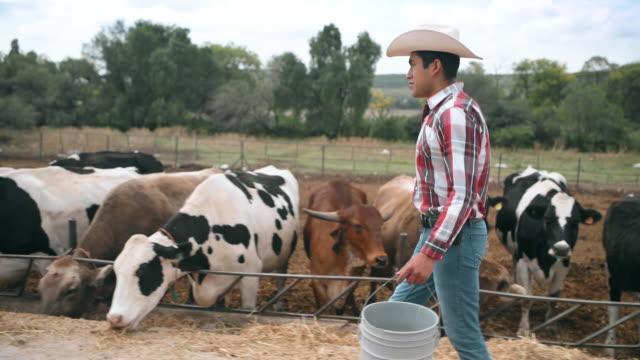 mexican farmer feeding cows - cowboy hat stock videos & royalty-free footage