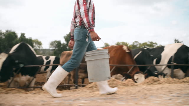 mexican farmer feeding cows - ranch stock videos & royalty-free footage