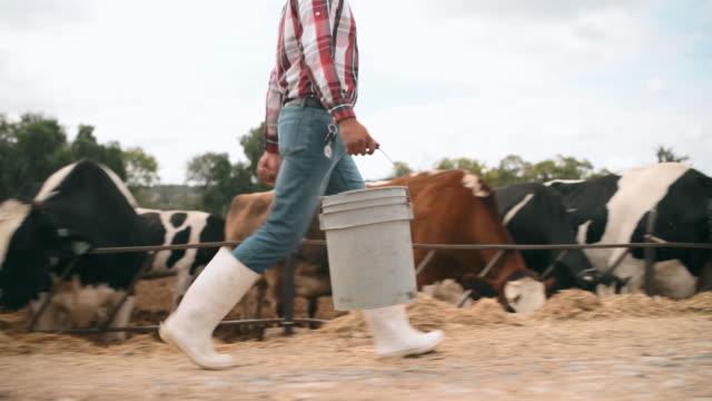 mexikanischer landwirt, der kühe füttert - ranch stock-videos und b-roll-filmmaterial