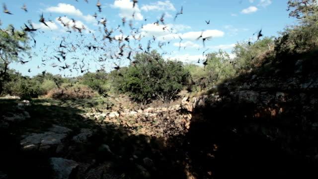 messicana free-coda di pipistrelli volare fuori diavolo texas - pipistrello video stock e b–roll