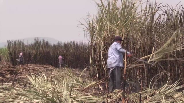 mexico is harvesting its sugar cane crop but some of the sugar it produces could be left stranded at the us border because of a conflict over the... - economy stock videos & royalty-free footage