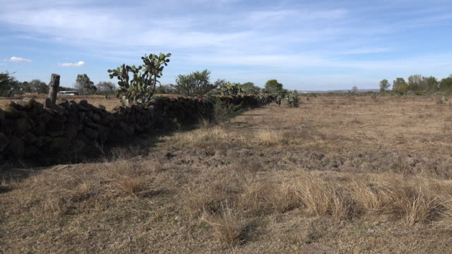 mexico jalisco rural wall with opuntia - stone wall stock videos and b-roll footage