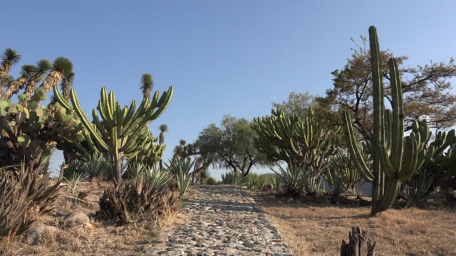 stockvideo's en b-roll-footage met mexico path past cacti - tuinpad