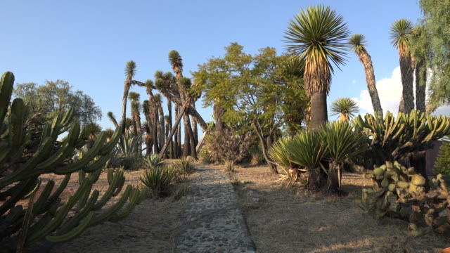 stockvideo's en b-roll-footage met mexico path through cacti and yucca - tuinpad