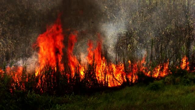 mexico: sugar cane harvest, burning step - non urban scene stock videos & royalty-free footage