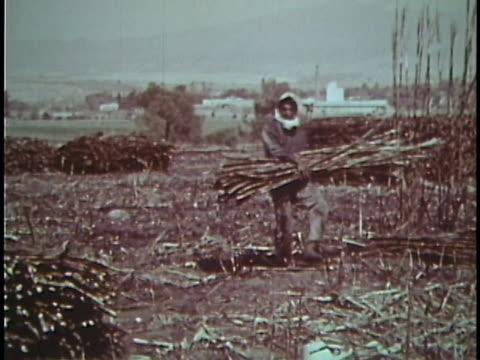1961 mexico - plantation stock videos & royalty-free footage