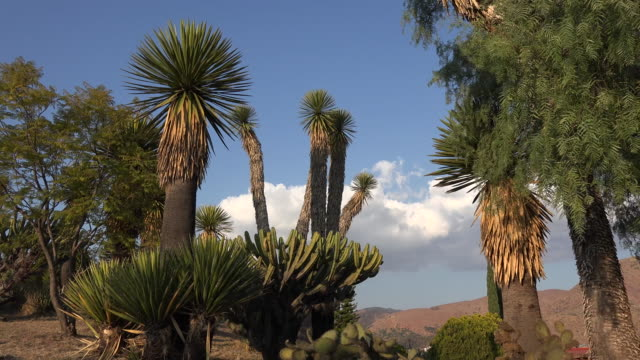 mexico yucca and cloud in blue sky - yucca stock videos & royalty-free footage