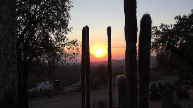 mexico zooms in on setting sun - cactus silhouette stock videos & royalty-free footage