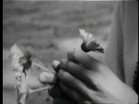 mia farrow tucking a flower behind her ear / uttar pradesh india - mia farrow stock videos & royalty-free footage