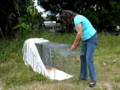 sonia osorio groups of volunteers patrol the rural areas in homestead to look for abandoned dogs must of them dumped by people who no longer want... - miami dade county stock videos and b-roll footage