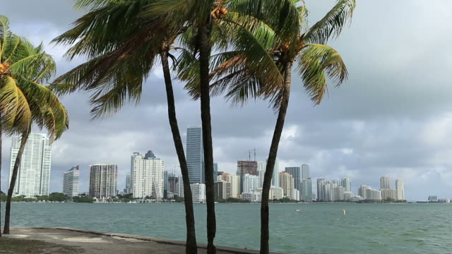 miami, florida - biscayne bay stock-videos und b-roll-filmmaterial