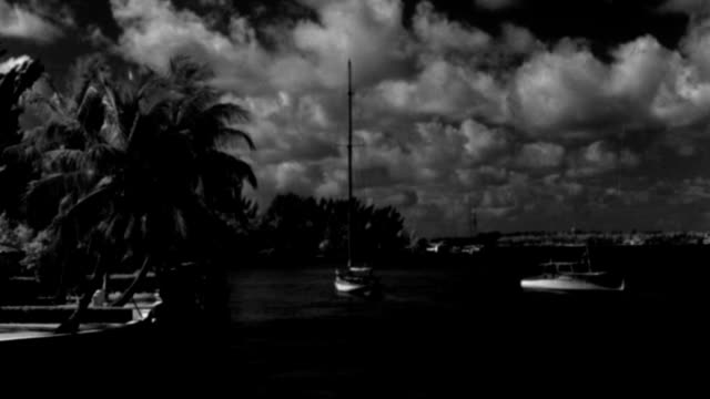 nx - miami florida - yacht - biscayne bay: yachts at anchor - clouds in sky - palm tree - b&w. - biscayne bay stock-videos und b-roll-filmmaterial