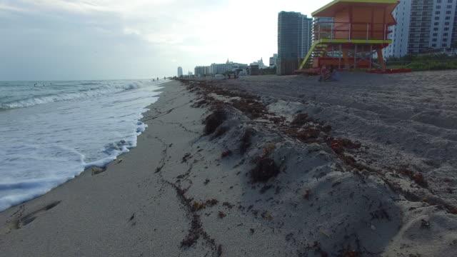 miami south beach - seaweed stock videos & royalty-free footage