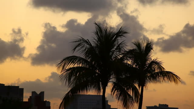 miami sunset - biscayne bay stock videos & royalty-free footage