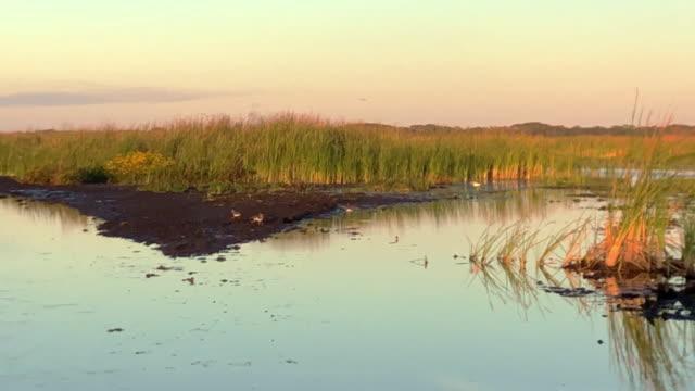 miami swamp - エバーグレーズ国立公園点の映像素材/bロール