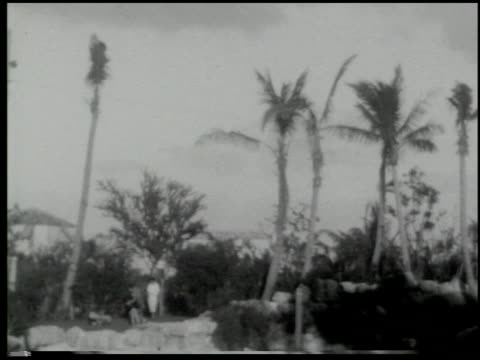 miami: the magic city - 2 of 10 - この撮影のクリップをもっと見る 2371点の映像素材/bロール