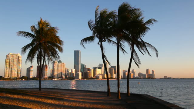 von miami - biscayne bay stock-videos und b-roll-filmmaterial