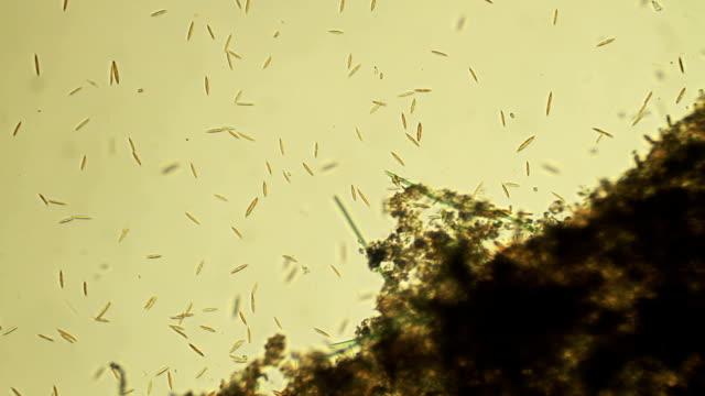 micro 物質: diatoms - high scale magnification点の映像素材/bロール