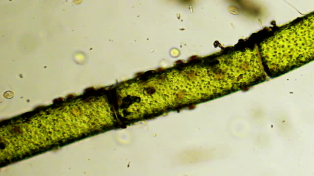 Micro organisms: plant and microbes