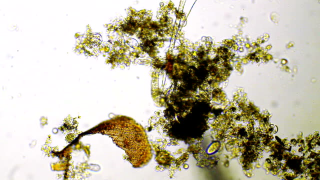 micro organisms - unicellular organism stock videos and b-roll footage