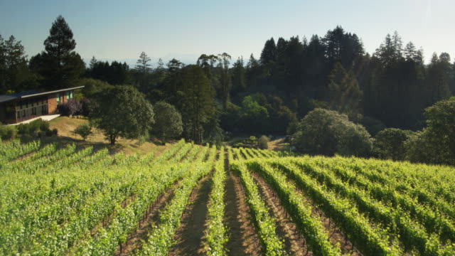 Sonoma Backyard micro winery in sonoma backyard drone shot stock footage video