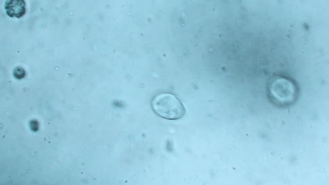 microbes in water - biological cell stock videos and b-roll footage