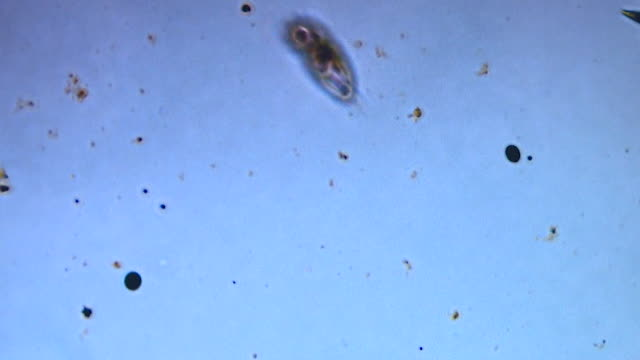 microbial life under a microscope - large group of animals stock videos & royalty-free footage