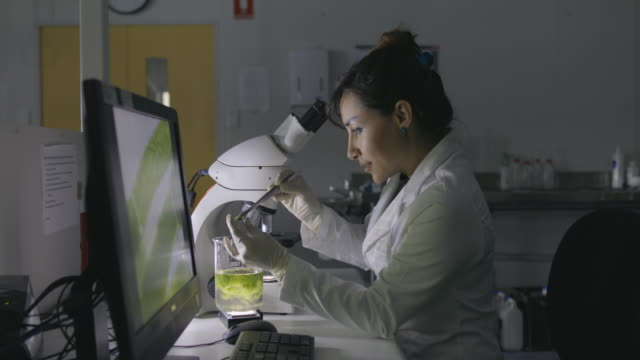 microbiologist working in lab - microbiology stock videos & royalty-free footage