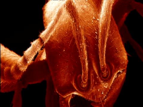vídeos de stock, filmes e b-roll de micrograph of small worker driver ant east africa - micrografia científica
