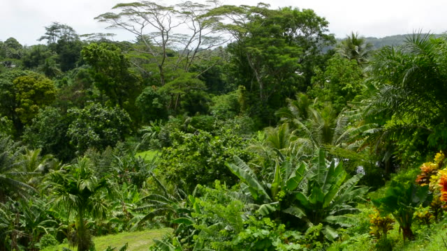 Micronesia beautiful lush rain forests in mountains with plants