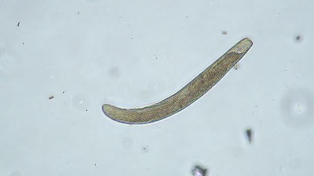 微生物 - high scale magnification点の映像素材/bロール