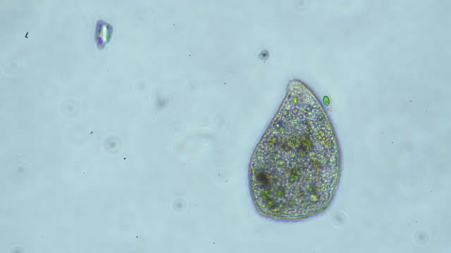 microorganism - unicellular organism stock videos and b-roll footage
