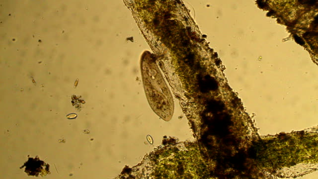 microorganisms - film montage - unicellular organism stock videos and b-roll footage
