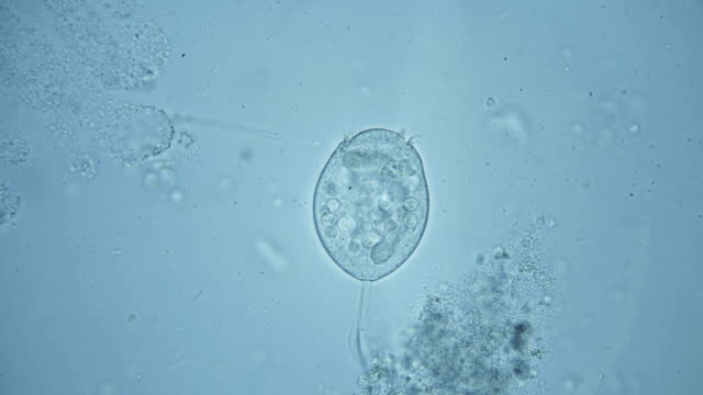 microorganisms,the inhabitants of the aquarium under the microscope,like an alien organism